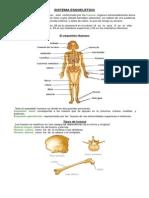 El sistema esquelético u óseo
