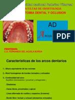 4 Arcos Dentarios