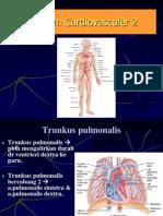 Anatomi Sistem Kardiovaskuler 2