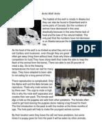 Arctic Wolf/ Arctic