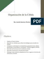 Celula Ppt Universidad