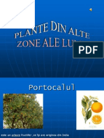 Planted in Alte Zone