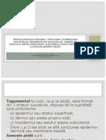 PAF_teg_loc_2
