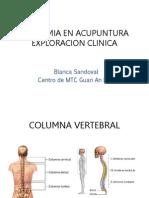 Anatomia en Acupuntura