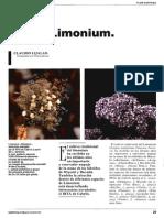 limonium 1.pdf