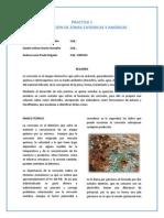 Informe Practica Lab 1