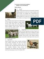 Copy (2) of Bangsa Ternak Perah