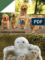 5404 Familles Nombreuses IB-FP-JCB