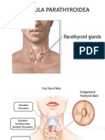 GLANDULA PARATHYROIDEA