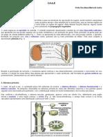 Caule em estrutura primária e secundária
