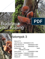 Budidaya Jamur Kuping