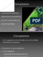 5. Cloroplastos