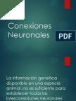 La información genética disponible en una especie animal ,no es suficiente para  establecer todas las interconexiones neuronales que  puede tener un ser humano en la etapa embrionaria