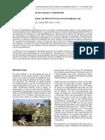 yacon pdf