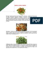 Tipos de Cortes de Legumes e Outros Vegetais