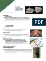 animales en vías de extinción.docx