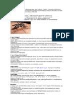 A Palavra Dengue Tem Origem Espanhola e Quer Dizer