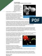Nova função para proteínas do sistema imune