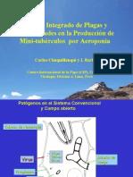 Control integrado de plagas y enfermedades en la producción de mini-tubérculos  por aeroponia
