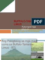 Buffalo Tamaraw Limus