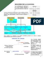 3.- Metabolismo de la glucosa.pdf