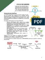 4.- Krebs y glioxilato.pdf