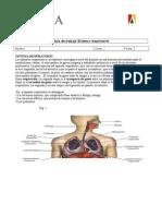 Guia de Trabajo Sistema Respiratorio 2013