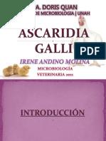 A. Galli