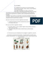 2. La reproducción asexual o vegetativa_MIC 9°