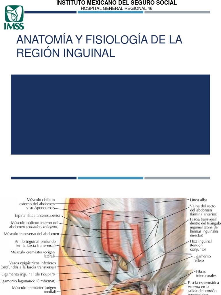 AF Region Inguinal
