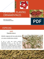 Especias y Plantas Ornamentales