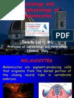 melanocytephisiologyandpathophisiology