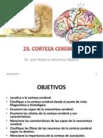 23 Corteza Cerebral