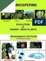 21-Gymnosperms1