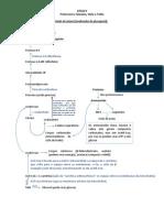 Bioquímica da glicose (período de jejum) - Stela