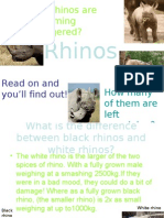 Why Are Rhinos Are Becoming Endangered?