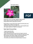 Berikut Ini Gambar Bunga Kamboja