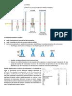 Estructura externa del cromosoma eucariótico