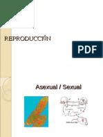 REPRODUCCIÓN2