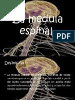 Medula Espinal !!