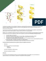 Estructura Secundaria de Las Proteinas