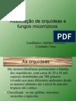 anatomia vegetal micorriza