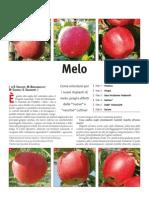 varietà di melo