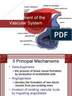 Establishment of Vascular System