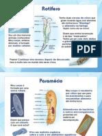 Eucariotos-microscópicos1