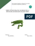 GMP Conserve de Mazare Verde