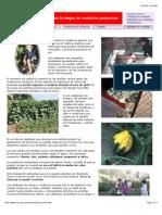 El cultivo de las calabazas.pdf