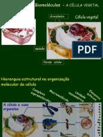 Bioelementos e Biomoléculas - AGUA E NUTRIENTES datashow