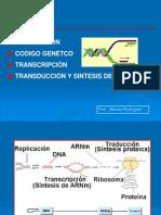 Transcripción ADN-2013 3ºy4ºclase