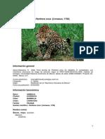 Pantheraonca00